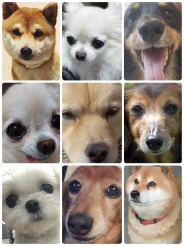 犬コラージュ01